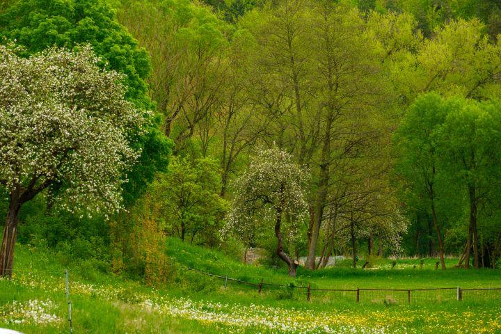 Spring landscape in Thuringia