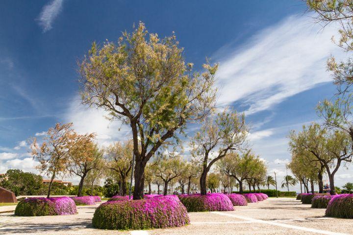 Park with trees in Palma de Mallorca